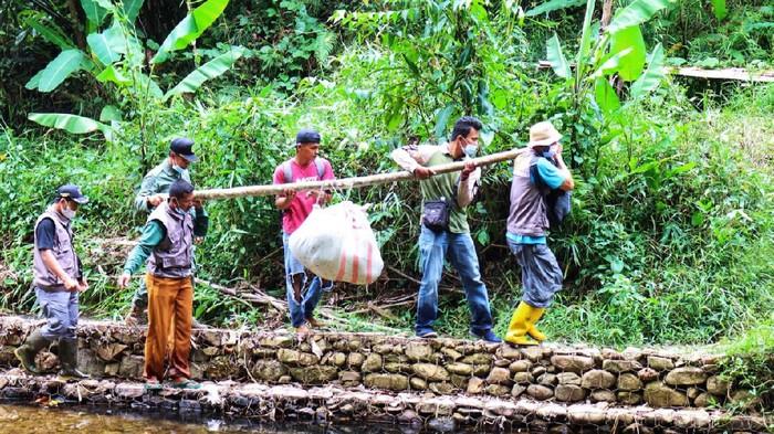 Ular piton 9 meter yang gegerkan warga Riau
