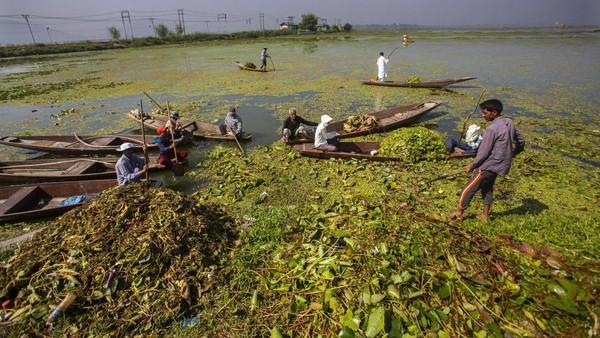 Gulma, lumpur, dan limbah menghalangi keindahan danau luas yang mendominasi kota. Puluhan ribu wisatawan hadir setiap tahunnya. (Mukhtar Khan/AP)