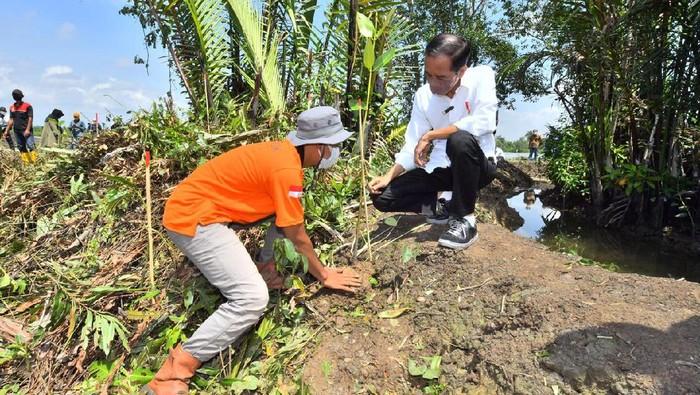 Jokowi melakukan penanaman mangrove