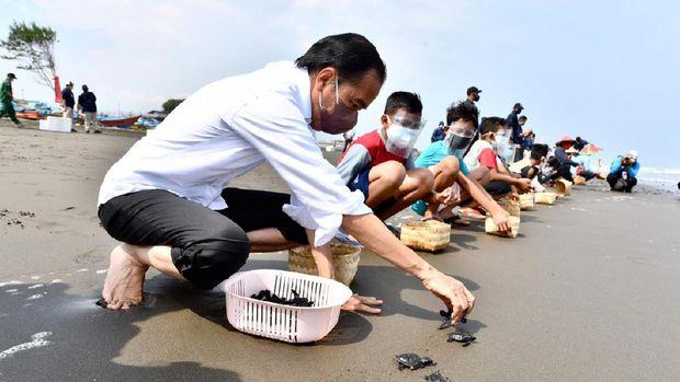 Jokowi Lepas Tukik di Cilacap
