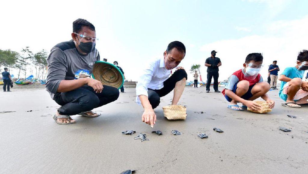 Gaya Jokowi Nyeker-Lepas Tukik Bareng Anak-anak di Pantai Cilacap