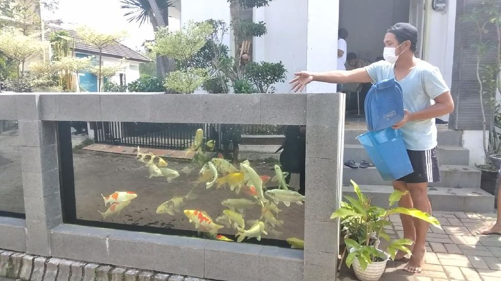 Desain Pagar Rumah Kolam Ikan Koi Warga Malang Habiskan Puluhan Juta Rupiah