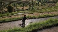 Targetkan 2,5 Juta Petani Muda di 2024, Pemerintah Genjot Akses KUR