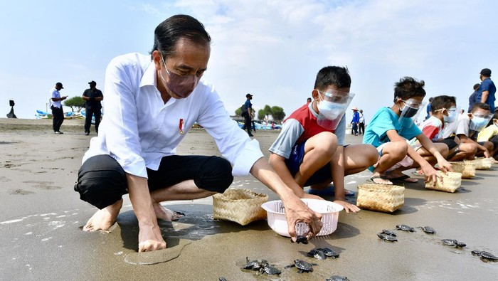 Presiden Joko Widodo melepas tukik di Pantai Kemiren, Desa Griya Tegalsari, Kelurahan Tegal Kamulyan, Cilacap Selatan, Cilacap, Jawa Tengah (23/9/2021). ANTARA FOTO/Setpres-Agus Suparto/foc.
