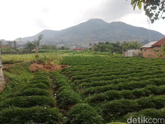 Salah satu area terbuka hijau di kawasan Jatinangor Sumedang