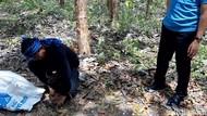 Monyet-monyet di Gunungkidul Diburu dan Ditangkap, Buat Apa?