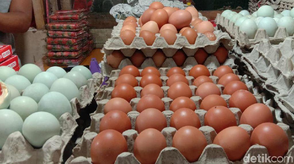 Harga Telur Ayam Anjlok, Peternak di Rembang Merugi