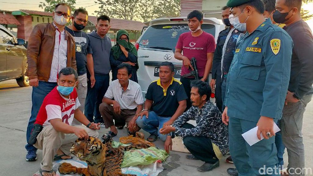 Jual Kulit Harimau, 4 Warga Sumbar Ditangkap di Riau