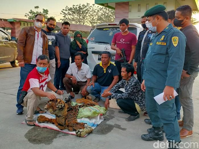 4 warga Sumbar ditangkap karena menjual kulit Harimau Sumatera (Dok istimewa)