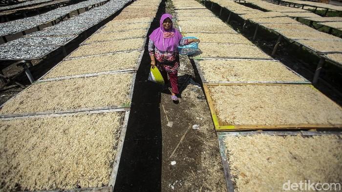 Kampung nelayan di Sentolo Kawat, Cilacap baru saja dikunjungi Presiden Jokowi. Aktivitas di kampung ini sudah dari nenek moyang lho, begini potretnya!