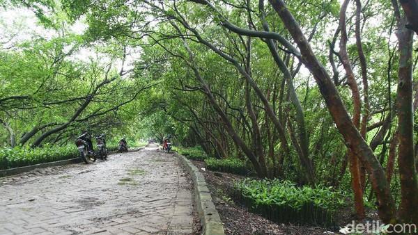 Setidaknya ada tiga jenis hutan mangrove yang tumbuh di peisisir Jakarta, antara lain, hutan bakau (Rhizophora), Api-api (Avicennia) dan Pidada (Sonneratia caseolaris).