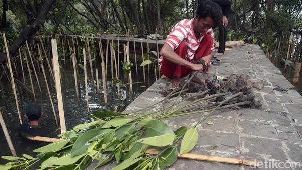 Tidak ada salahnya bagi kalian yang ingin menikmati jalan-jalan ke pesisir Jakarta, cobalah bermain ke kawasan ekosistem hutan mangrove yang ada di sana. Kalian bisa mengunjungi sambil belajar untuk bisa berbuat sesuatu untuk turut serta menjaga kelestariannya.