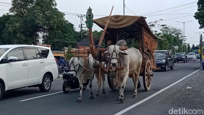 Gerobak sapi, merupakan alat transportasi langka di tengah kemajuan kompetisi dunia otomotif saat ini. Enggak percaya? Ini foto-fotonya!