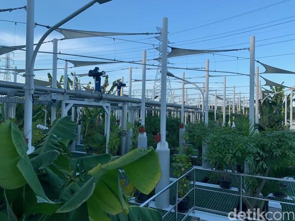 Ada 40 jenis tanaman termasuk tanaman hias dengan jumlah total tanamannya ada 300 tanaman di sini.