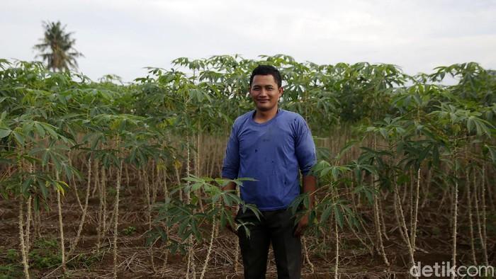 Bertani singkong menjadi usaha turun temurun bagi sebagian besar warga Dusun Sido Mulyo, Kampung Fajar Bulan, Kecamatan Gunung Sugih, Lampung Tengah.