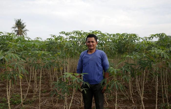 petani singkong