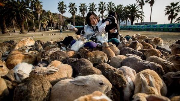 Pulau Okunoshima namanya. Berada di kawasan Takehara, Jepang, pengunjung yang datang ke pulau itu dapat melihat beragam kelinci hidup bebas di pulau tersebut tanpa takut dimangsa predator.