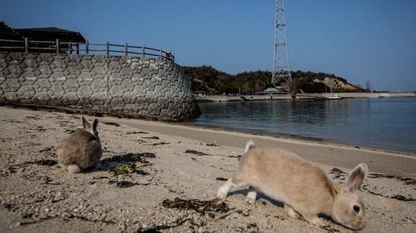 Aktivitas itu dilakukan secara rahasia hingga kabarnya titik koordinat lokasi fasilitas itu telah dihapus dari peta Jepang. Kehadiran kelinci-kelinci di Pulau Okunoshima juga dikabarkan tak lepas dari aktivitas rahasia tersebut.