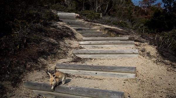 Tak sedikit wisatawan yang datang ke sana untuk melihat langsung para penghuni berkaki empat di pulau itu.