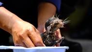 Aksi Damkar Selamatkan Bayi Kucing Terjebak di Pipa Rumah