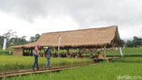 Mau Wisata Foto Hijau Royo-royo? Cobain Desa Mulyaharja
