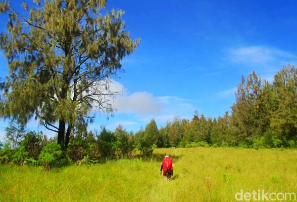 Untuk menyusuri pegunungan dengan puncak favorit bernama Puncak Rengganis ini, dibutuhkan waktu setidaknya 5 hari perjalanan pulang pergi. (Chuk Shatu W/detikcom)