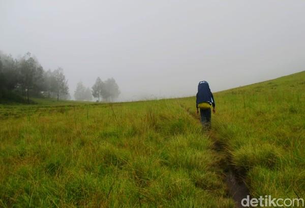 Kawasan yang memiliki luas 14.177 hektar ini masuk dalam pengelolaan Suaka Margasatwa (SM) Dataran Tinggi Iyang.(Chuk Shatu W/detikcom)