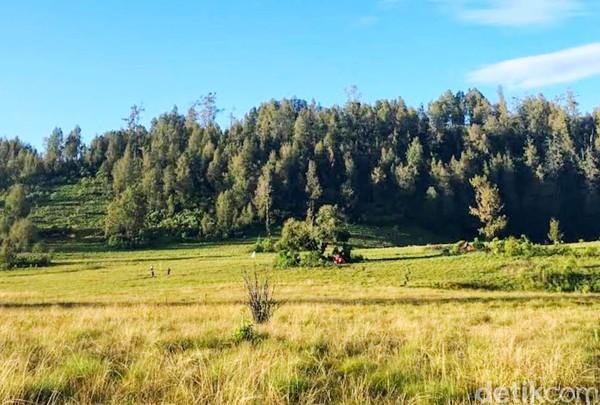 Ada 2 jalur untuk masuk kawasan ini. Yakni jalur timur via Baderan, Situbondo dan jalur barat melalui Bremi, Probolinggo. (Chuk Shatu W/detikcom)