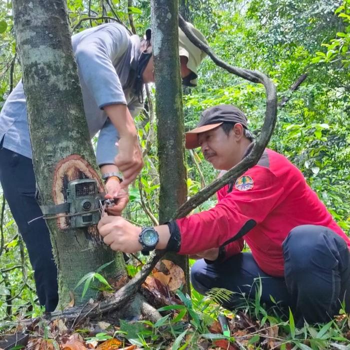 Pasang 106 Camera Trap, TN Meru Betiri Fokus Identifikasi Populasi Macan Tutul