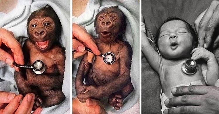 Bayi hewan yang menggemaskan