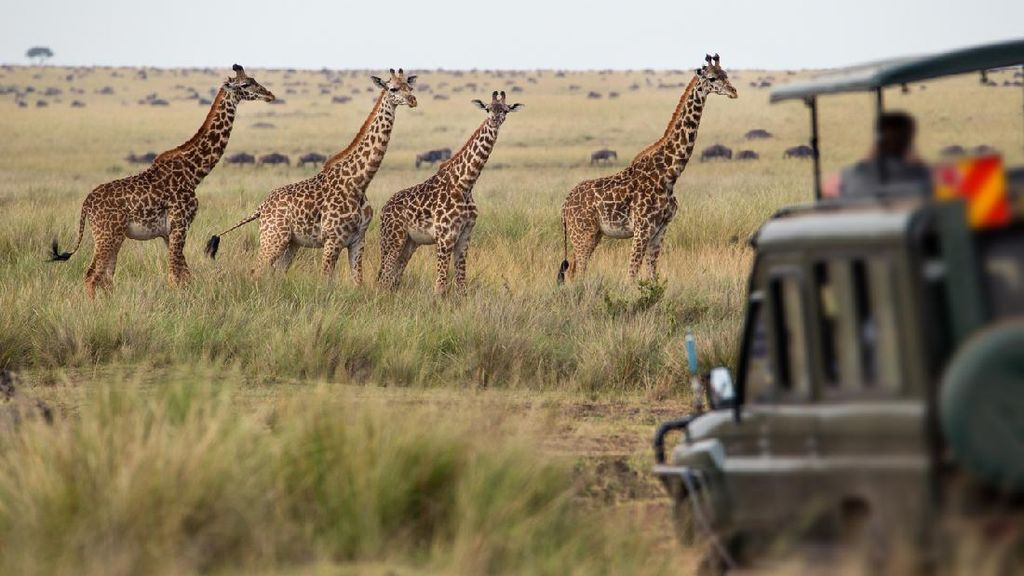 Kenapa Benua Afrika Dikenal sebagai Benua Hitam? Ini Sejarahnya