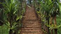 Menikmati Rindangnya Pepohonan di Bukit Cianten