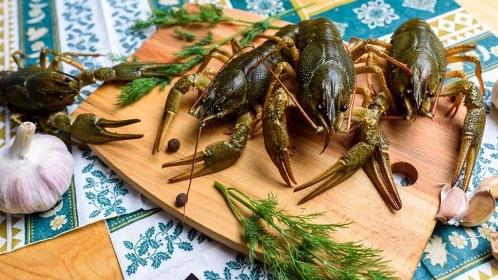 Ngeri! 7 Hidangan Ini Sajikan Hewan Hidup dan Bergerak-gerak di Piring