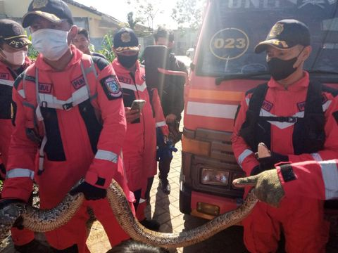 Telur ular piton yang ditemukan di pekarangan rumah warga di Makassar. (dok. Istimewa)