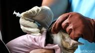 Hari Rabies Sedunia 2021: Tema dan Pesan Penting Tahun Ini