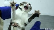 Hari Rabies Sedunia, Hewan Peliharaan di Jakarta Ramai-ramai Divaksin