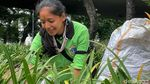 Meski Hamil, Murni Tetap Gigih Bekerja di Tengah Pandemi
