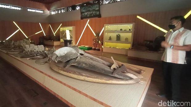 Kerangka ikan raksasa di Museum Kartini.