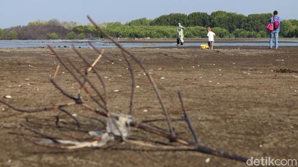 detikTravel menyambangi Pantai Muara Beting yang berada di ujung Muara Gembong beberapa waktu lalu. Berangkat dari kawasan Cikarang, dibutuhkan waktu dua jam lebih untuk mencapainya (Randy/detikTravel)