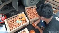 Harga Anjlok, Peternak di Tasikmalaya Bagi-bagi Telur 2,5 Ton