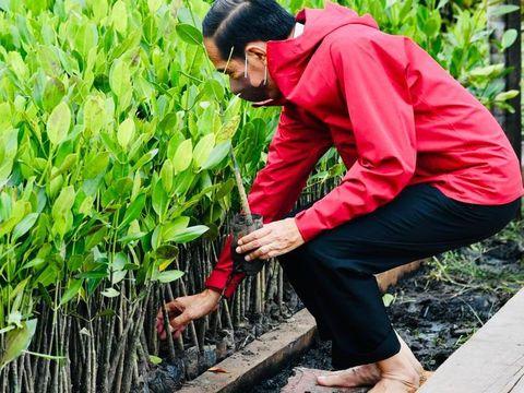 Presiden Jokowi menanam mangrove di Bengkalis, Riau.