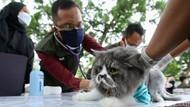 Dipantau Bupati Ipuk, Ribuan Hewan di Banyuwangi Divaksin Rabies