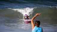 Gemasnya Anjing-anjing Ini Saat Adu Surfing