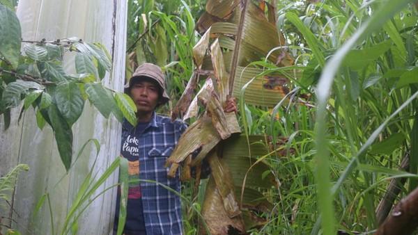 Daun pisang ini berbentuk seperti pisang umumnya dengan ukuran lebih besar, lebar sekitar satu meter dan panjang sampai enam meter. Ukuran buah diameter bisa 4 - 6 cm dan panjang sekitar 10 - 15 cm.