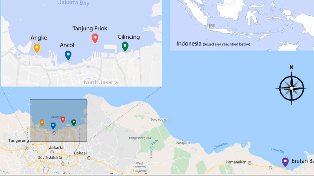 Pencemaran Paracetamol di Teluk Jakarta yang Jadi Sorotan