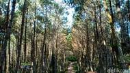 Bosan Wisata Biasa Saja? Jajal Rute Hiking dan Trekking di Lembang