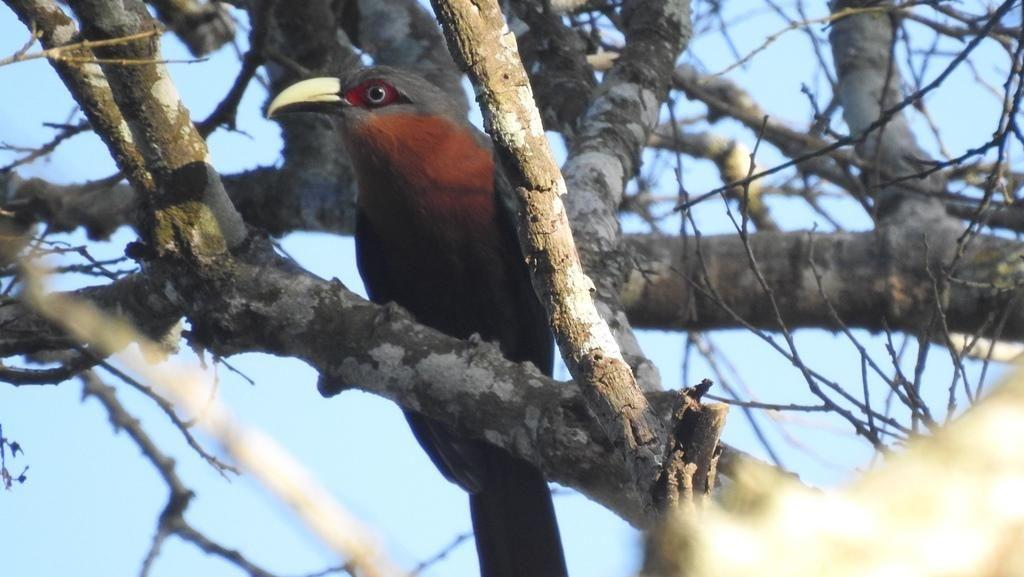 Ada 43 Jenis Burung di Hutan Lindung Malang, 9 Dilindungi