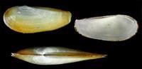 Pusat Riset Oseanografi BRIN menemukan 27 spesies baru di di perairan dalam Selat Sunda dan Barat Daya Jawa.