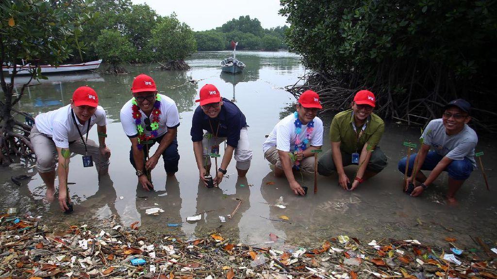 JMI-IFG Tanam Mangrove di Pulau Tunda