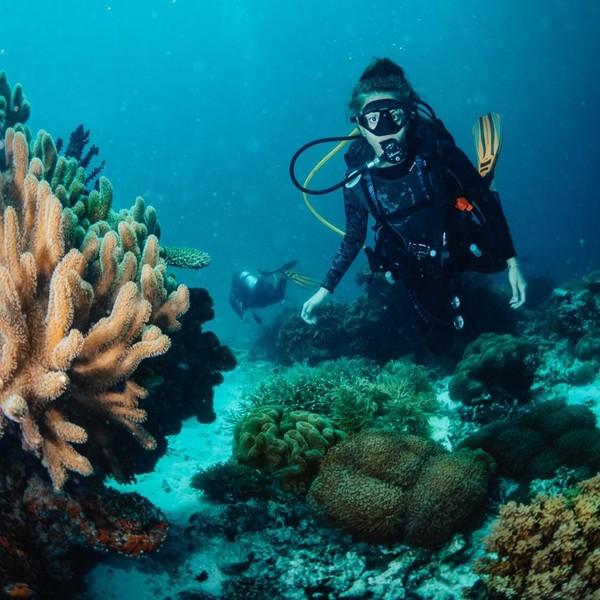 Dirinya menyempatkan diri untuk menyelam di Raja Ampat. (Lexie Alford/Instagram)